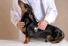 Curso Ortopedia Veterinária / 60 horas