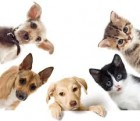 Curso Patologia Veterinária Especial de Cães e Gatos / 55 horas